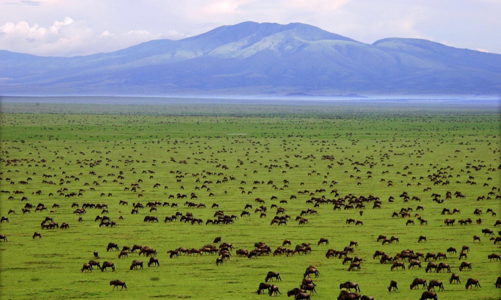 Tanzania Online